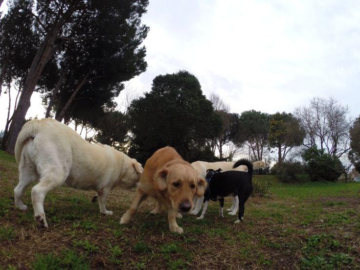 #goprodog il nostro Dog park a Rona