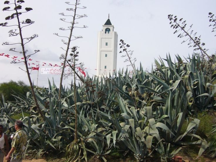 Tunezja - Agawy