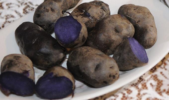 #Le patate vitelotte Lady Viola