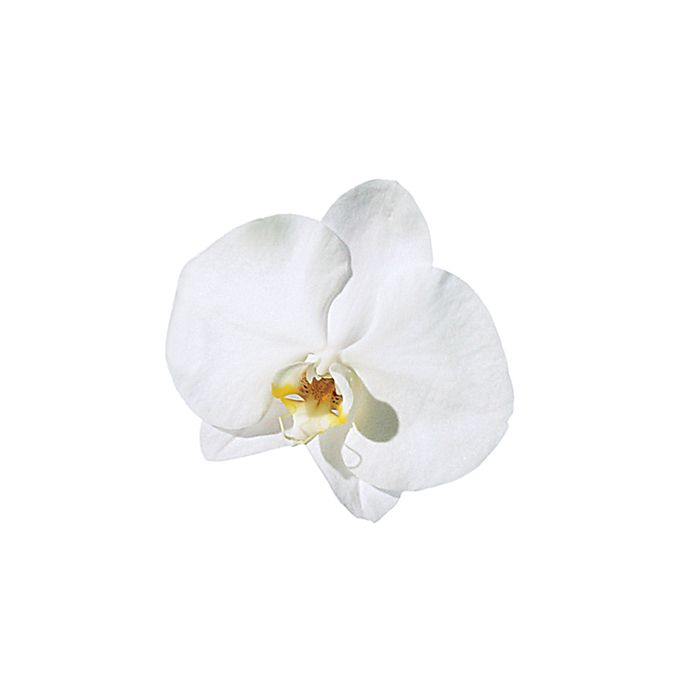 Brides.com: A Glossary of Wedding Flowers by Color. Phalaenopsis Orchid. In addition to the white version, this breed of orchid comes in lavender, fuchsia, blush, and yellow. Incorporate it into a cascading bouquet.  Browse more phalaenopsis orchid flower ideas.