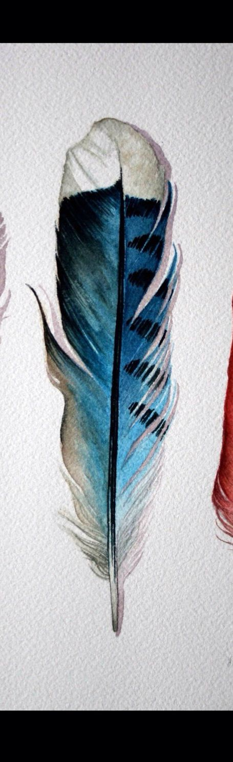 Perfect blue jay feather for in my dream catcher tattoo
