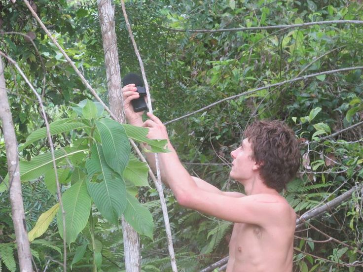 Stay Tuned with Nature   www.frontier.ac.uk   #travel #rainforest #travel # volunteer #soundscaping #jungle #nature #naturesounds #naturesoundmap