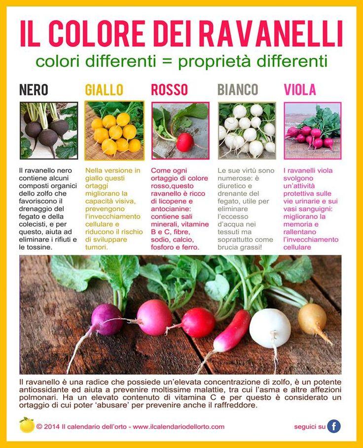 Il colore dei ravanelli