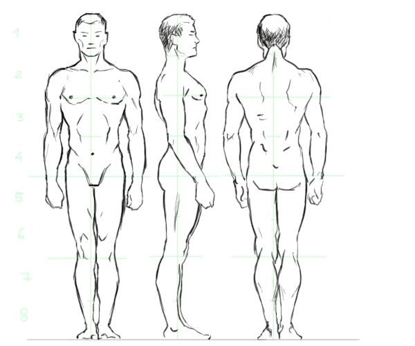 This is the best tutorial to learn how to draw people. Start by drawing basic construction lines using a step by step approach and draw the male human figure in perfect proportions