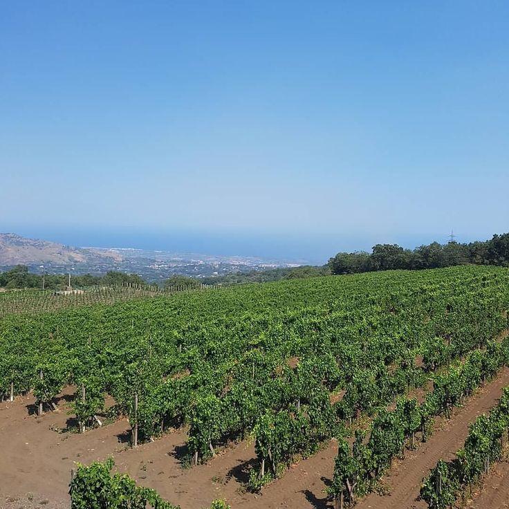 В хозяйстве Gambino собраны ценные сорта местного винограда -Карриканте Нерелло Маскалезе Нерелло Каппуччо Неро Д'Авола. Они позволяют создавать деликатные и душистые белые вина яркие и насыщенные красные. #vigneto #gambinovini #etna #sicilia  #vino #wine #etna #winelover #instasicily #igsicilia #vineyard #sicily #winery #vigneto #winerytour #gambinovini #winetasting #winetourism #vinery #cellar #grapewines #whatsicilyis #igcatania #igsicilia #igsicilia #winemakers #ilovewine #wineoclock…