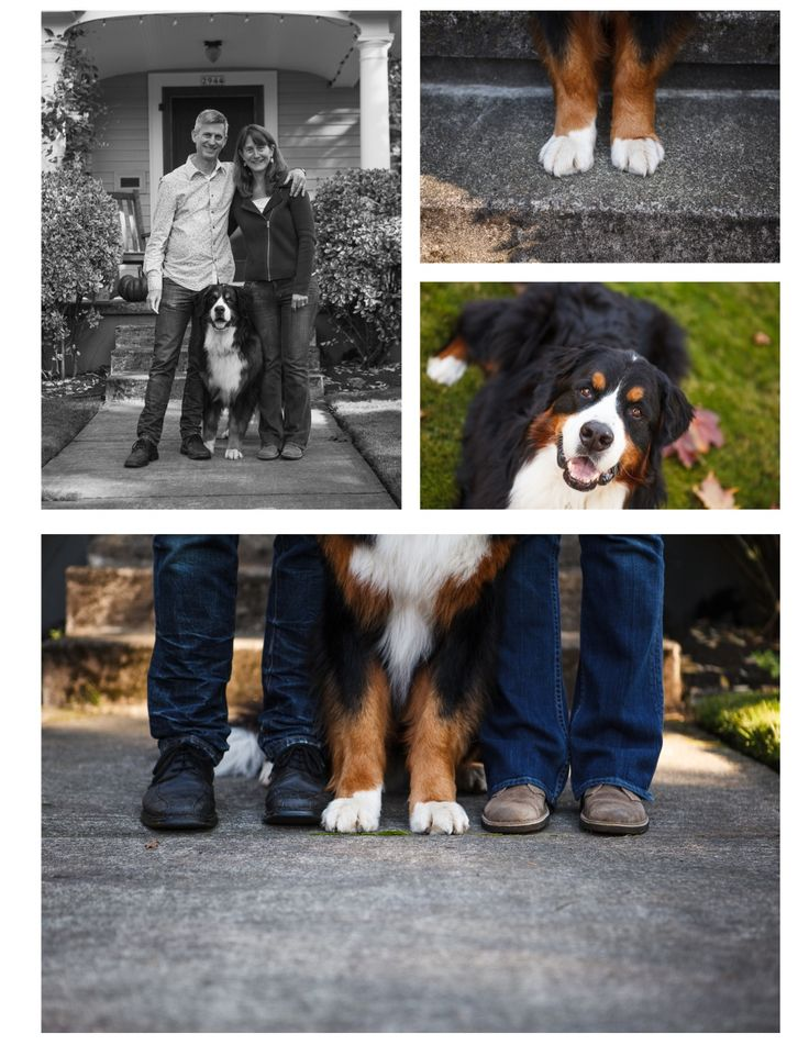 For the Love Pet Photography Bernese Mountain Dog