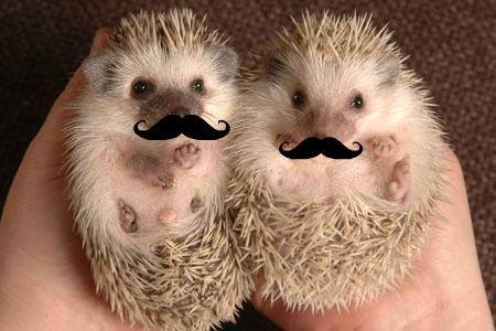 Hedge hogs w/ mustache!