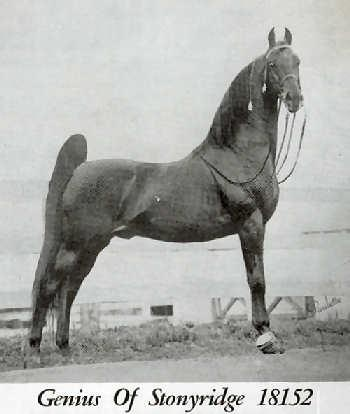 American Saddlebred breeding stallion Genius of Stonyridge was a full brother to Bourbon Genius, The Genius, Leatherwood Genius and Leatherwood King.