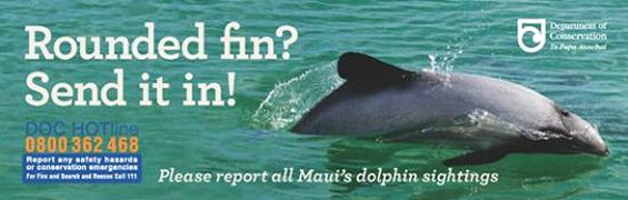 Rounded fin? Send it in! Please report all Maui's dolphin sightings.