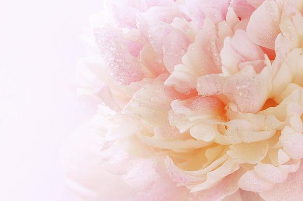 Pink Peony by Iuliia Malivanchuk #IuliiaMalivanchuk #IuliiaMalivanchukFineArtPhotography #ArtForHome #FineArtPrints #HomeDecor #ArtWorks #InteriorDesign #Spring #Flowers #Peony