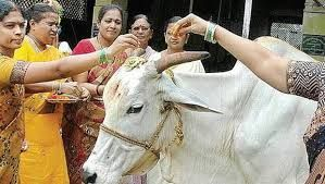 This is why Hindu worship the cows, very little known fascinating facts about cows