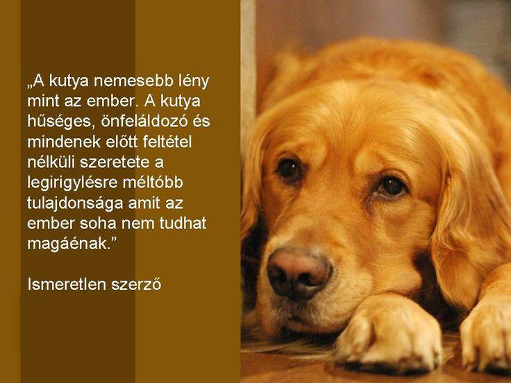 """""""A kutya nemesebb lény, mint az ember. A kutya hűséges, önfeláldozó és mindennek előtt feltétel nélküli szeretete a legirigylésre méltóbb tulajdonsága, amit az ember soha nem tudhat magáénak."""" Ismeretlen Szerző"""