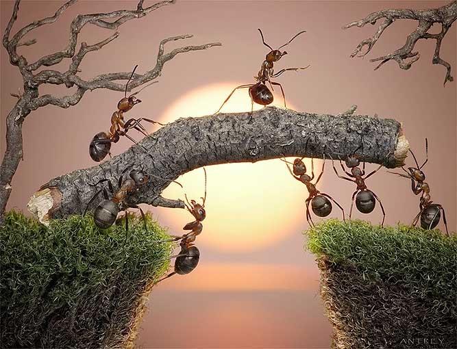 Bridge ant photo