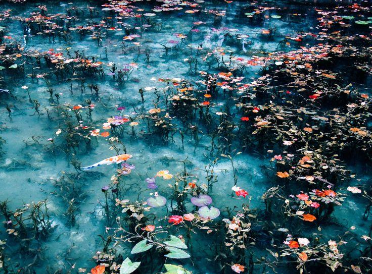 taka-jun: 岐阜県関市にある通称「モネの池」に行ってきた。 朝7時過ぎに到着した時点で見物客はすでに20人ほど。 10時頃には100人以上に。平日ですよ。 イメージしていたよりもかなり小さい池で地味だったけど楽しかったなぁ。