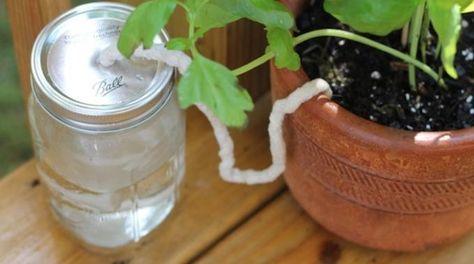 Vous cherchez une solution pour arroser vos plantes pendant votre absence ? Ne…