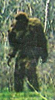 Bigfoot picture from Utah