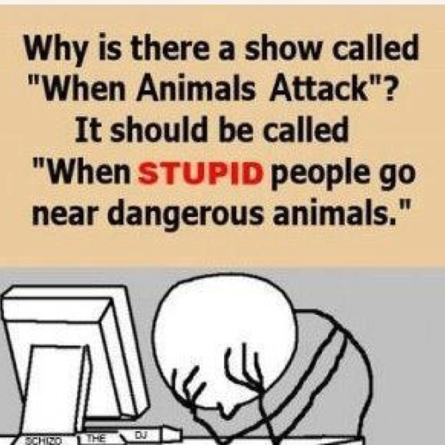 Best Quotes Funny But True: 75 Best Images About STUPID PEOPLE On Pinterest