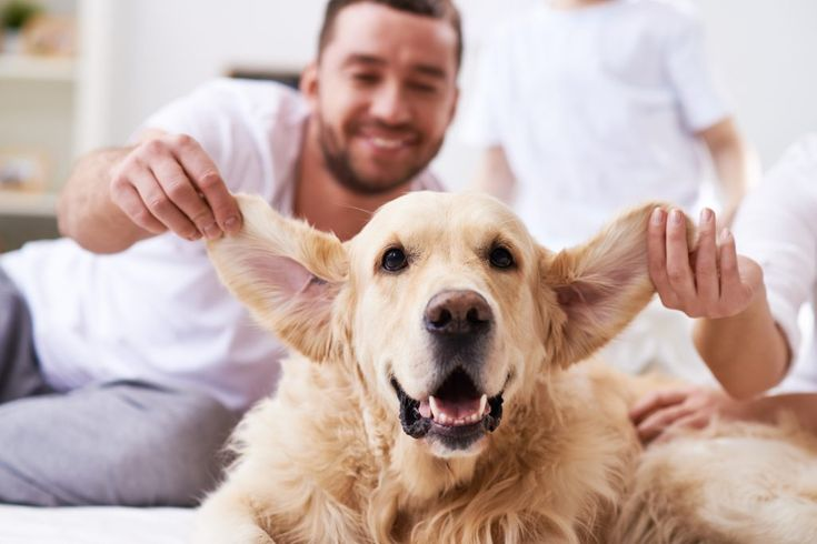 Animal Internal Medicine & Specialty Services | All Ears: The Importance of Pet Ear Care