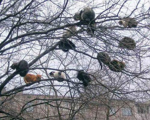 Считаем котов)))