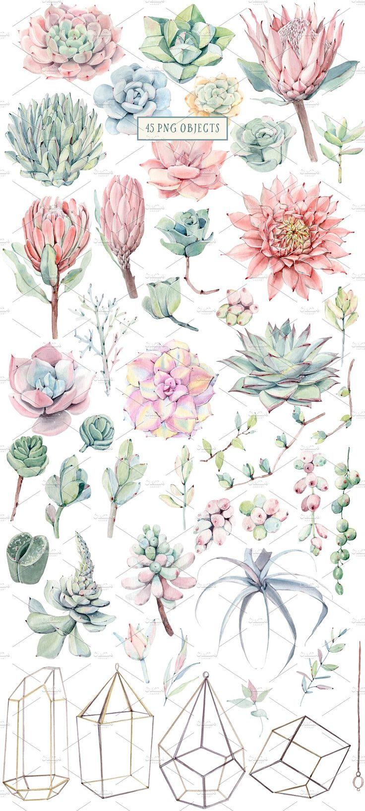 AMAZING SUCCULENTS Watercolor set by Lemaris on Cr…