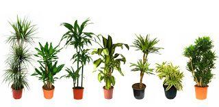 Lempeät tuulet: Top 10 Helpot ja kestävät huonekasvit kiirelliselle omistajille