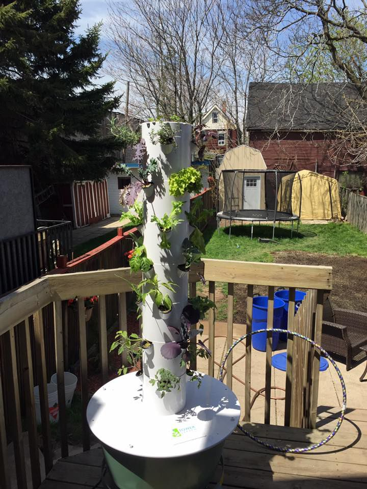 "Our first Tower Garden Tuesday!  Keep sending pictures to TGTuesday@juicepluscanada.com This one comes from Sueli ""This is our first family TG and this is with 1 week growth outdoors. It is still a baby and we can't wait to start picking off it! I love the education that the girls are able to get from seed to growth every day."" ‪#‎JuicePlusCanada‬ ‪#‎TowerGardenTuesday‬"