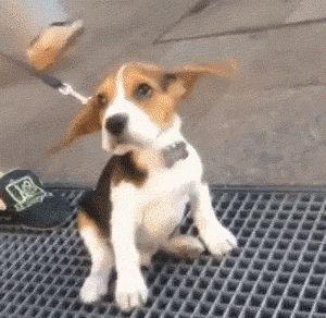 Who Is Waving My Ears?