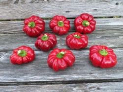 17 best images about the nation 39 s largest seed swap sse - Best romanian pepper cultivars ...