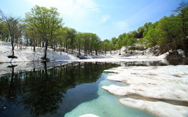白と緑のコラボレーション、なごり雪のイメージ。