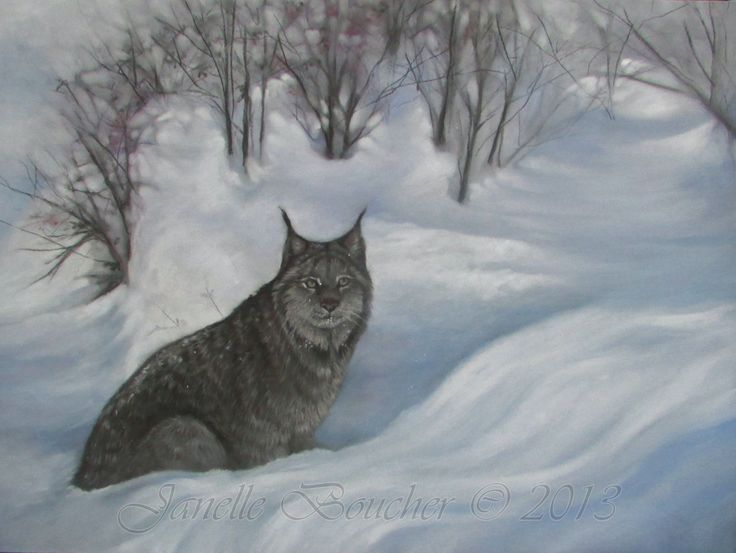 Lynx ~ Pastel on Ampersand Board , Thank you Dan Sauve for the fantastic reference photo !