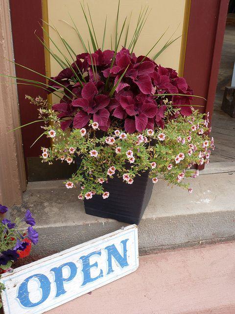 Flower pot....