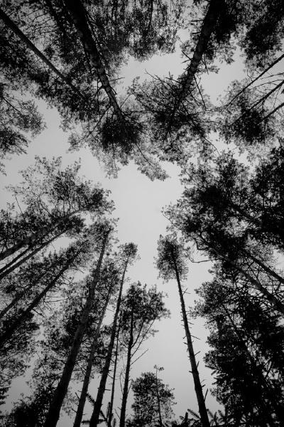 trees   foto: karen mirzoyan