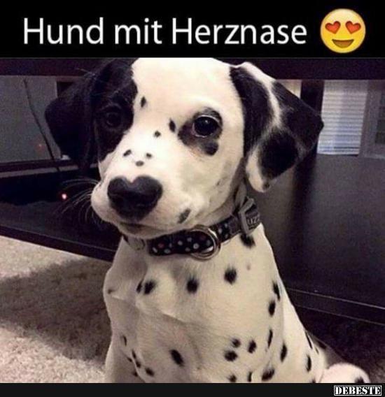 Hund mit Herznase. | Lustige Bilder, Sprüche, Witze, echt lustig