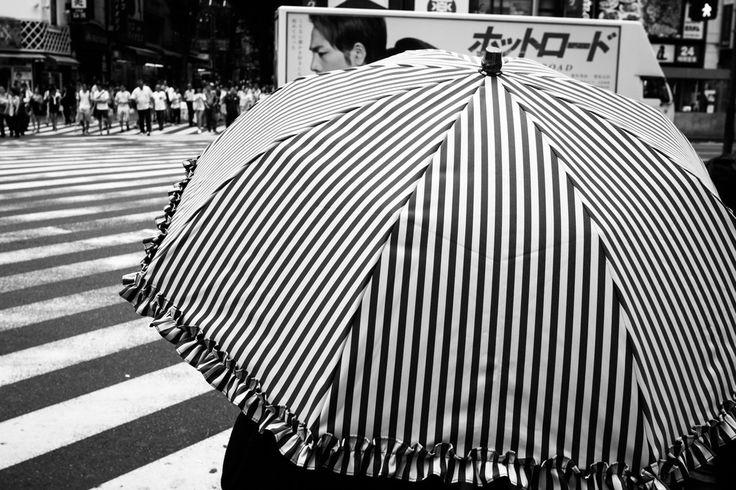 Tadashi Onishi - Zebra The City   LensCulture
