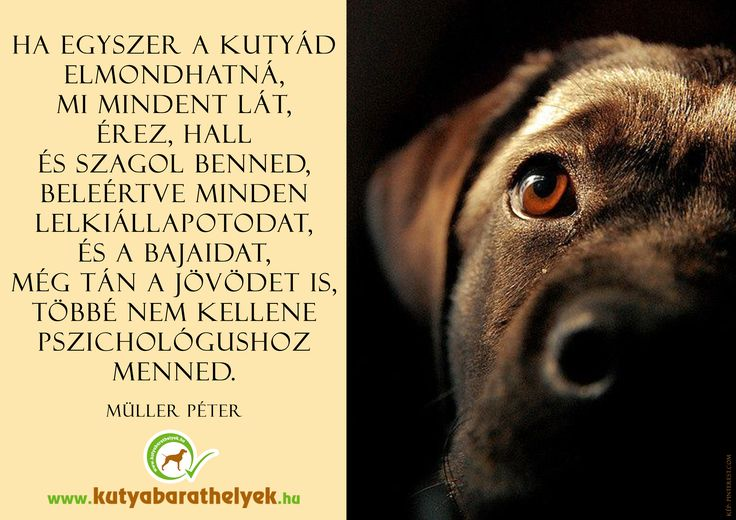 """""""Ha egyszer a kutyád elmondhatná, mi mindent lát, érez, hall és szagol benned, beleértve minden lelkiállapotodat, és a bajaidat,még tán a jövődet is, többé nem kellene pszichológushoz menned."""" (Müller Péter)  #kutya #idézet #quotes #dog #kutyabaráthelyek #kutyásidézet"""