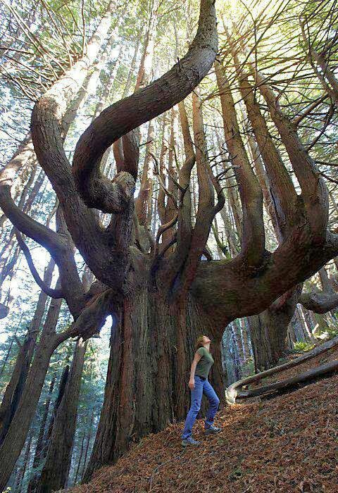 One of the Oldest Tree on Earth.......