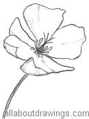 california poppy art lesson