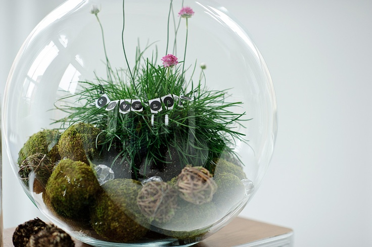 Terrarium Globe with plant and wicker balls