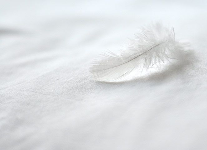 Credit: Damian Burcher Damian Burcher: 'This slightly bedraggled feather reminded me of the fragility of their structure.'