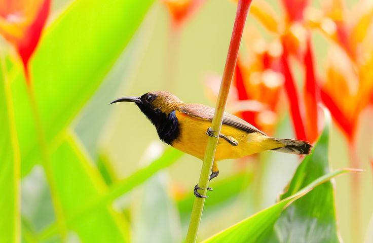 Bird in the Botanical Gardens