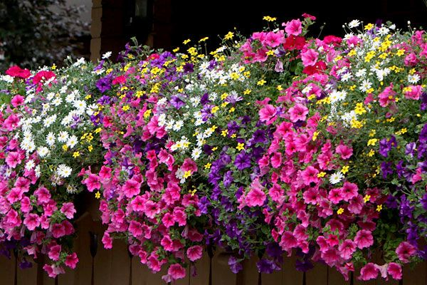 17 Best Images About Balcony Flowers On Pinterest