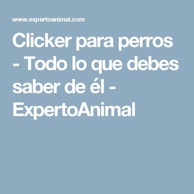 Clicker para perros - Todo lo que debes saber de él - ExpertoAnimal