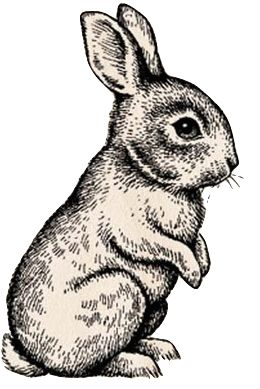 Rabbit line drawing in 2019 | Rabbit drawing, Bunny ...