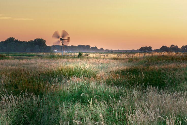 Rijsdammen: In de Rijskampen liggen twee eendenkooien, die nog in mindere mate worden gebruikt. Het landschap is plat en open, want dit gebied kan onder water worden gezet als er een overstroming dreigt. Er zijn helaas geen wandelpaden in dit landschap, maar vanaf de naastgelegen Hondermorgensedijk kun je mooi over het gebied uitkijken. Plan nu je uitje naar een van deze prachtige natuurgebieden @ www.streekweb.nl