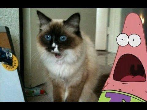 Best of Surprised Patrick