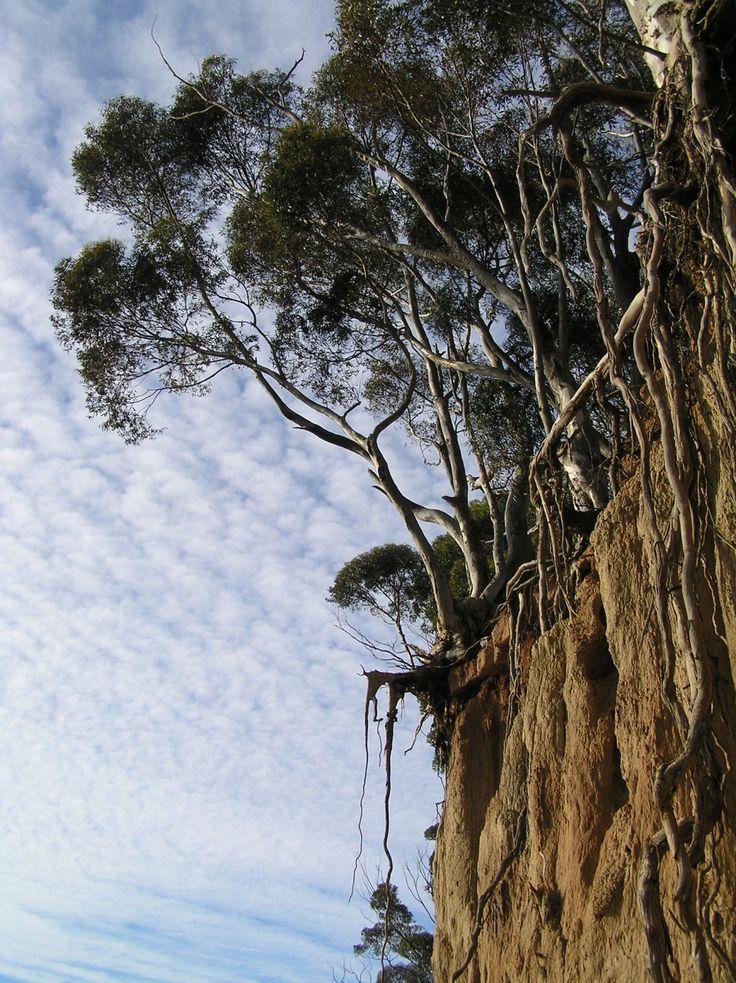 Studio Bonnici — Exposed, Werribee South Cliffs, Victoria, 2007....