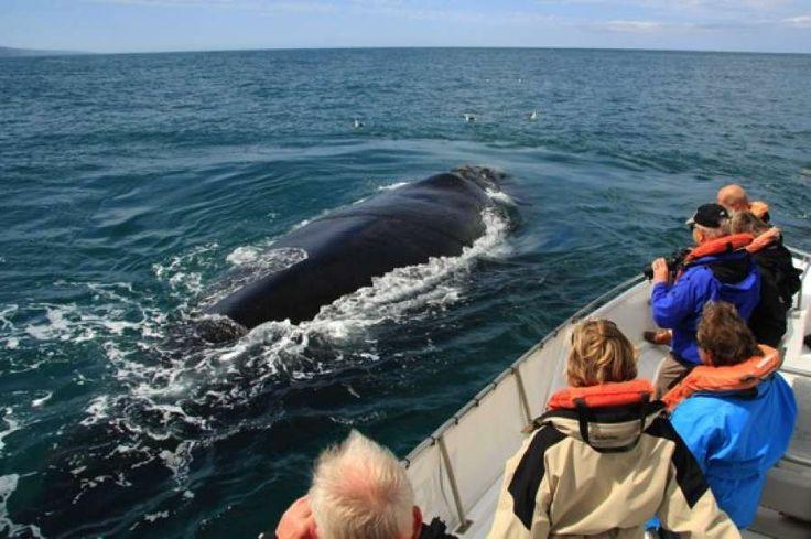 Whales watching, Knysna, South Africa / Наблюдение за китами, Найзна, ЮАР