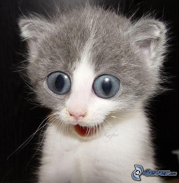 Katzchen Blick Grosse Augen Tierbabys Katzen Ausgestopftes Tier