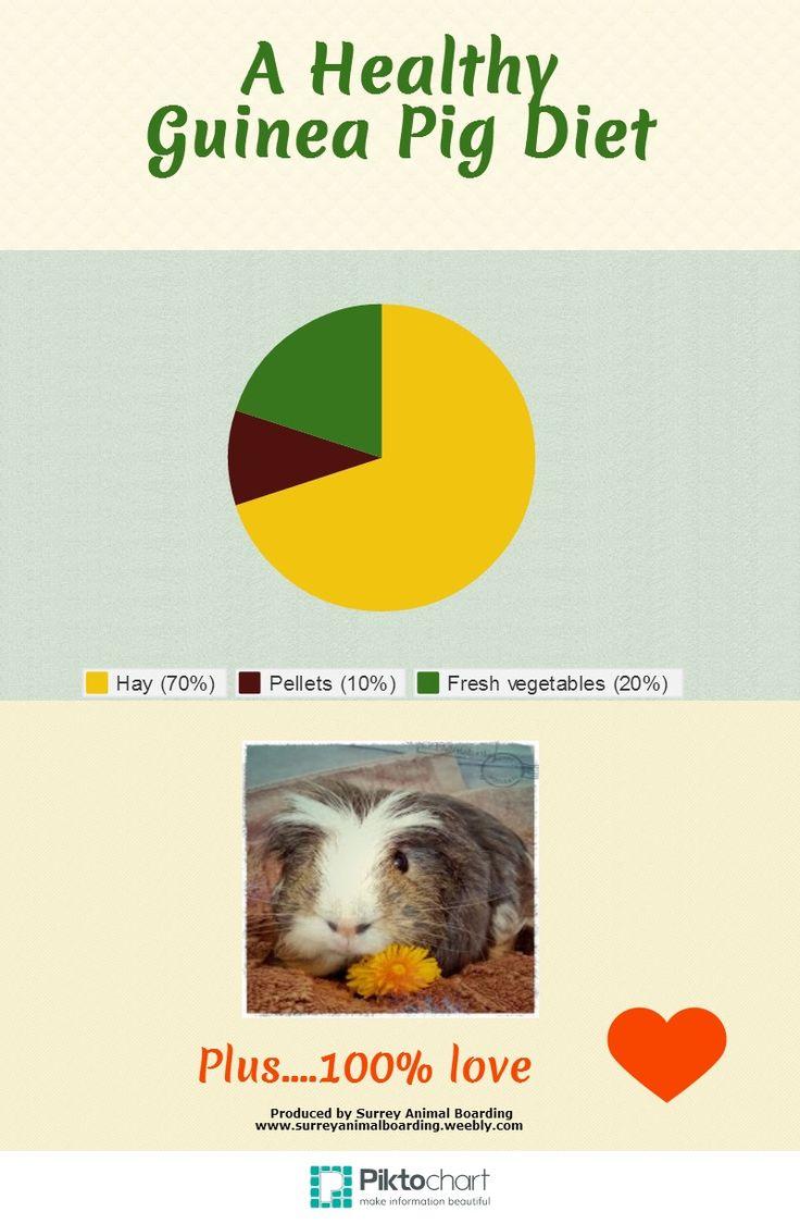 Healthy Guinea Pig Diet
