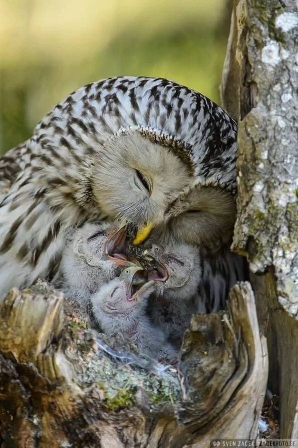 Nature of Mom ! To Feed Kid's First